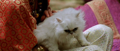 A harem girl holds the ubiquitous Persian Cat.