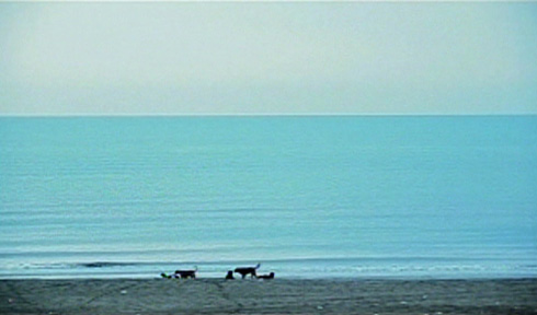 The third take features a pack of dogs that sit leisurely by the waves.