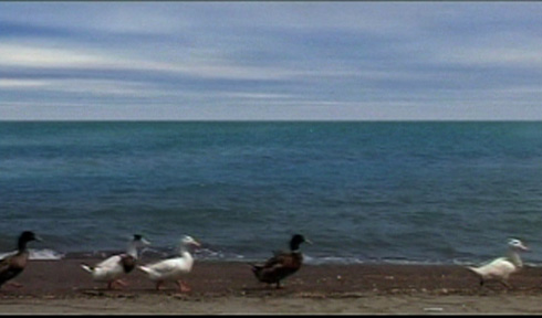 In the fourth take, a flock of ducks cross back and forth across the frame.